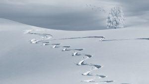 https://pixabay.com/fr/photos/hivernal-backcountry-skiiing-2068298/